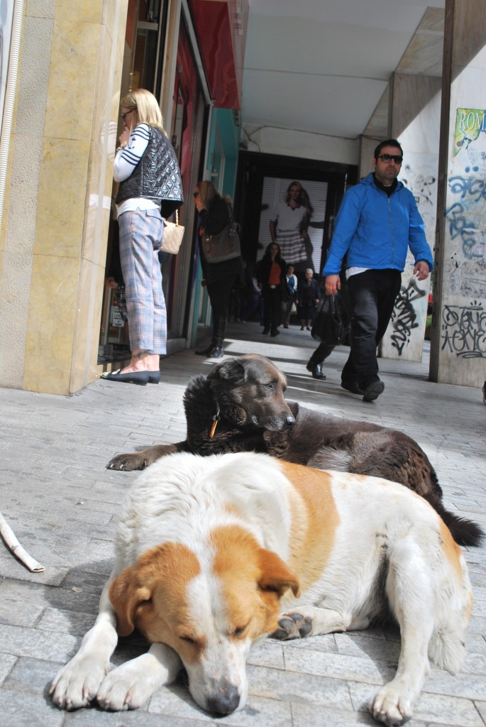 Les passants ne font même plus attention à ces chiens (photo CFJ/A.L)